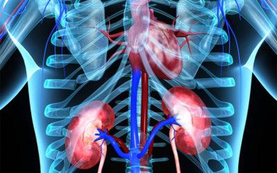 Efecto del magnesio en trasplantados renales