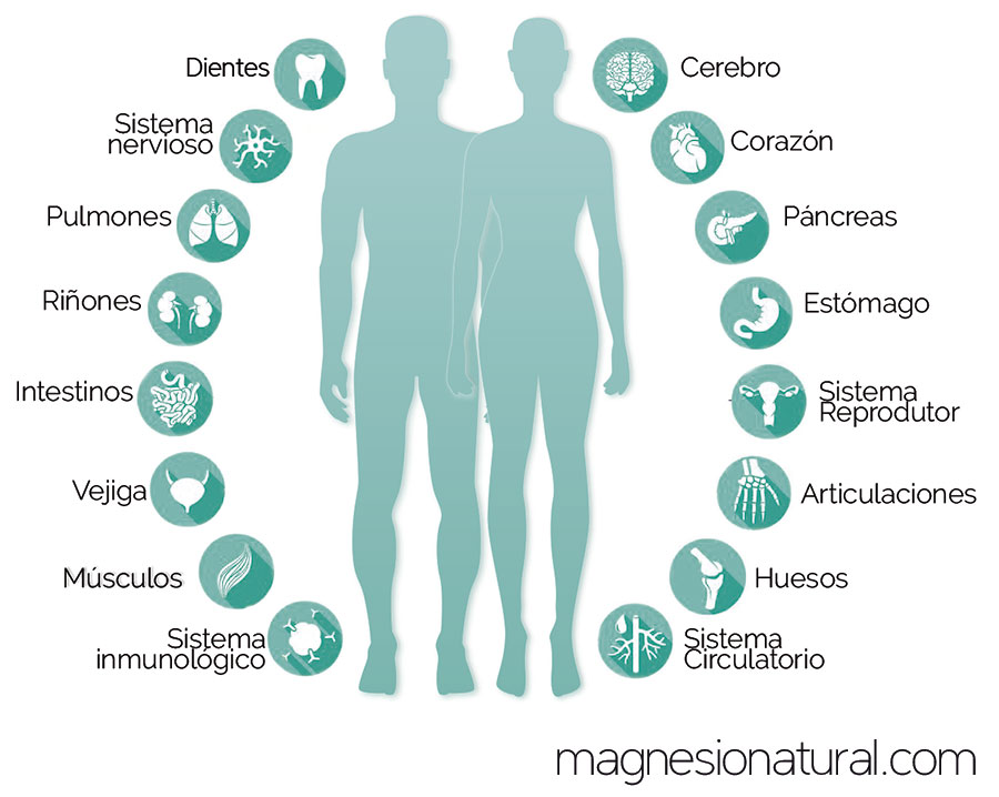 Incidencia del magnesio en nuestro organismo